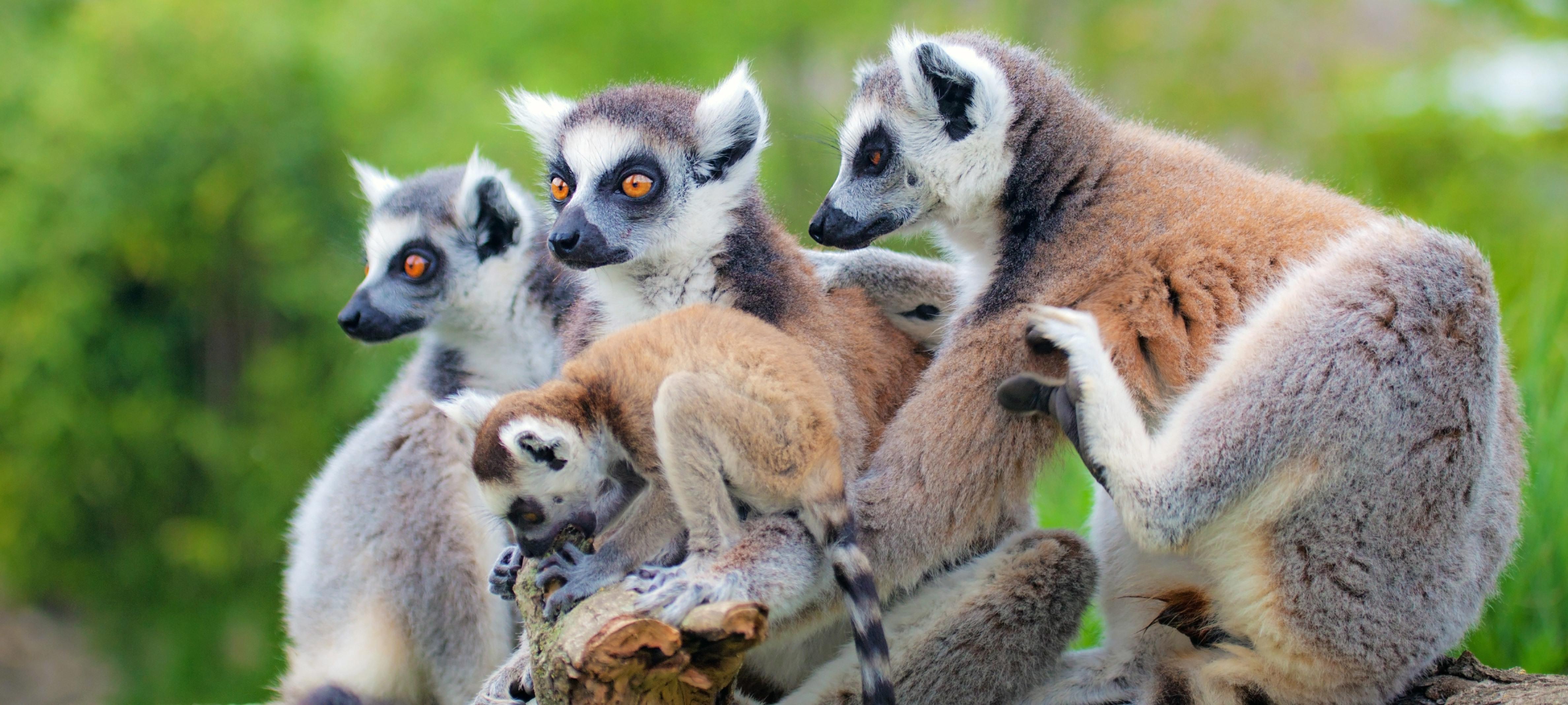 Classic-Madagascar-hero