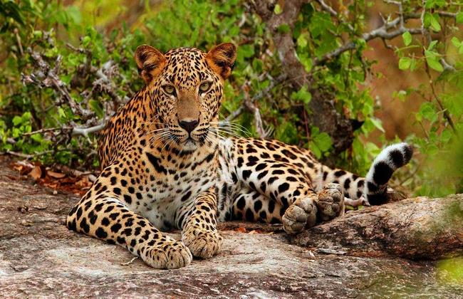 srilanka_yala-nationalpark-15